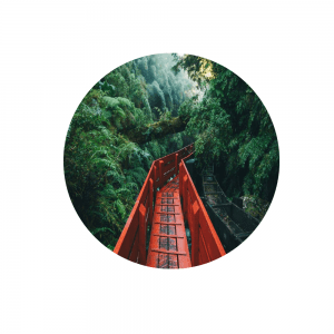 a curving red, wooden bridge cuts through a tropical rainforest